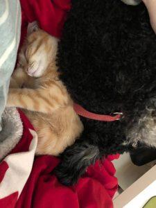 Hund Katze schlafen Tiergespräch Tierkommunikation