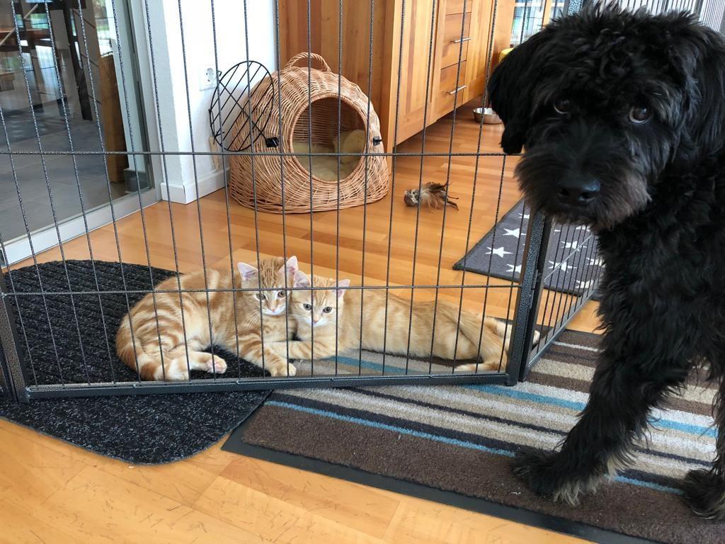 Hund, Katze, Tierkommunikation, Tiergespräch, Köln, Tierkommunikator