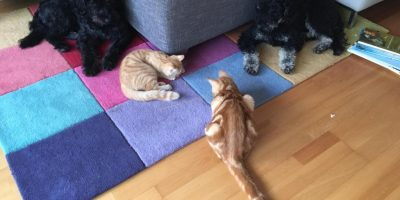 Hund Katze Tierkommunikation